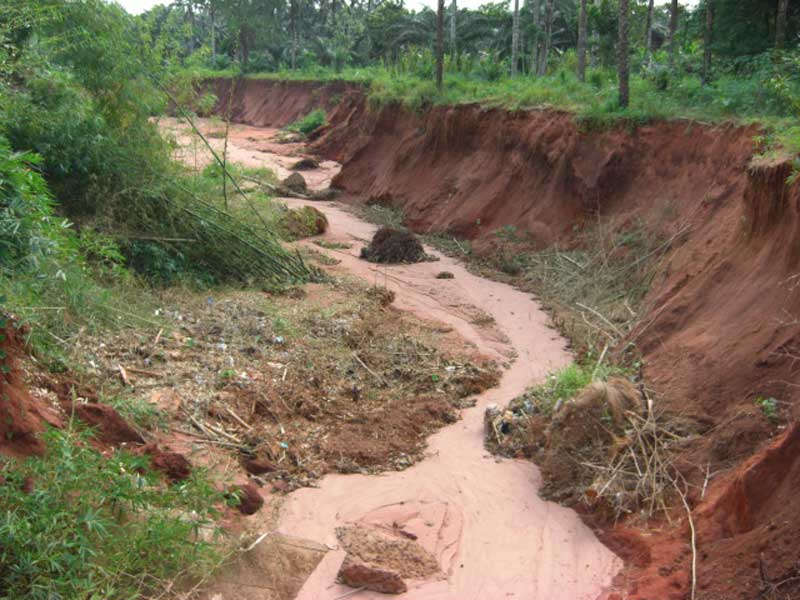 Simple Ways to Handle Water Runoff & Prevent Soil Erosion in